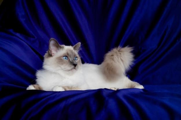 Blue in Blue :)