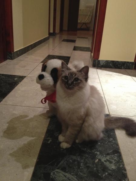 """Kutya - macska barátság"""