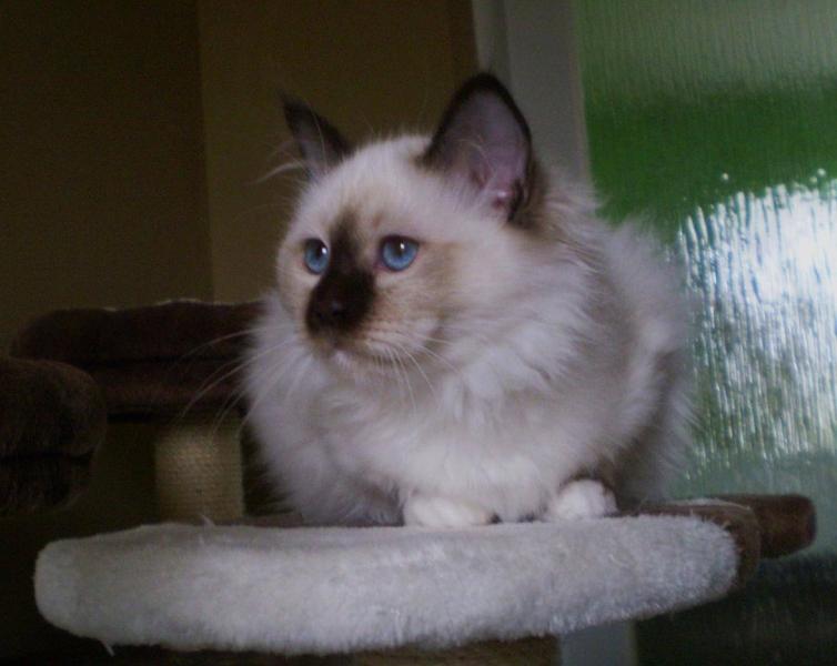 When I was a little kitten